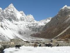 Yak party on the way to Gokyo